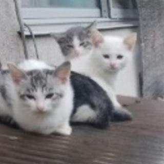 可愛い仔猫5匹~います!!