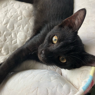 里親急募!黒猫ちゃん5ヶ月