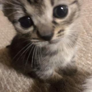 生後1ヶ月ほどのメス子猫
