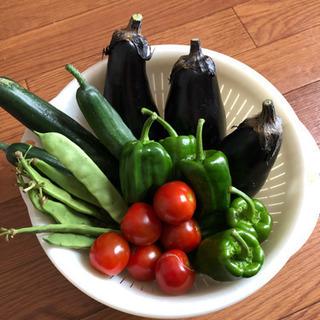 採れたて低無農薬 季節野菜 1キロ程度 500円