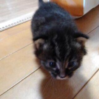 捨て猫を拾いました、里親さんを探しています。