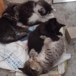 小屋で生まれた子猫
