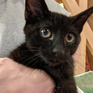 黒猫モンちゃん 3ヶ月の男の子