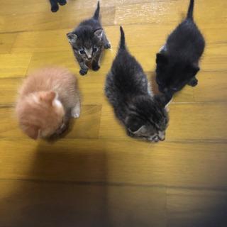 急募!!子猫の里親募集します。