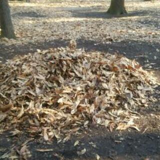 刈草、切り枝、落ち葉の運搬、処分致します。
