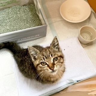 ♀子猫1匹の里親募集