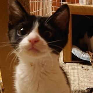 ペア譲渡💞おはなちゃんさくらちゃんペア - 猫