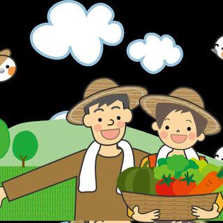 【急募!】朝と夕方の過ごしやすい時間帯での収穫や出荷作業などの農...
