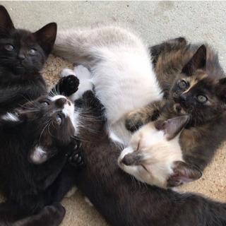 急募☆生後4ヶ月の子猫達の里親さん