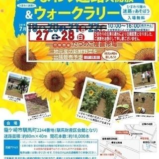 龍ケ崎ひまわりフェスティバル ひまわり迷路大開放&ウォークラリー