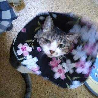 猫用 オリジナル「エリザベスカラー 」和柄