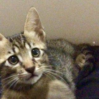 2ヶ月の子猫 2