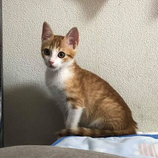 甘えん坊の猫ちゃんの里親さんを募集します。