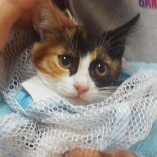 三毛猫子猫みいちゃん