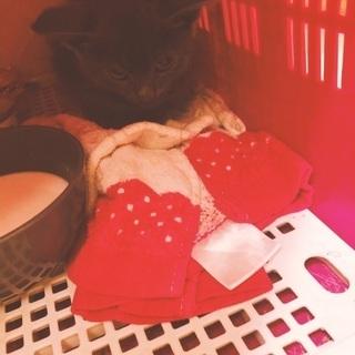 素敵な飼い主様が見つかりました!保護したばかりの子猫