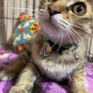 麦わら猫のかわいい女の子