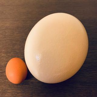 だちょうの卵の殻 一個