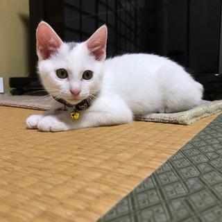 里親様決まりました!生後2ヶ月くらいの仔猫