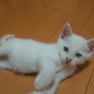 白猫赤ちゃん
