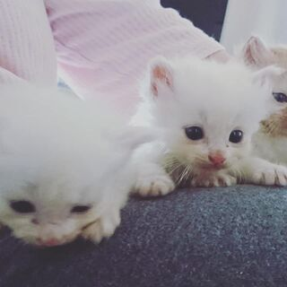 子猫ちゃんを助けてください