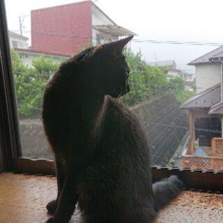 可愛い黒猫ちゃんをお譲りします