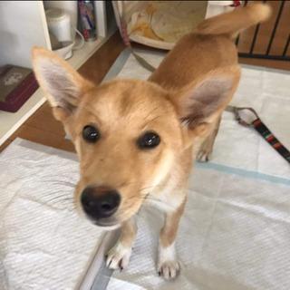 岡山保健所レスキューの子犬のロン君