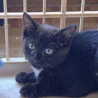 胸元が白い黒猫3ヶ月〜4カ月