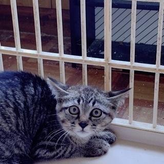 トラ模様の猫ちゃん3か月〜4か月