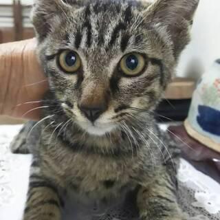 助けを求めてやってきた子猫。2カ月くらい。