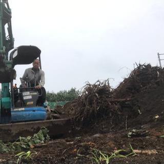 木の撤去☆伐採抜根工事なら 庭の手入れ店へ 所沢市 - 所沢市