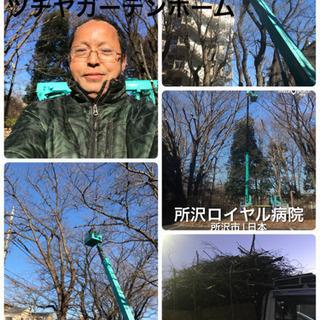 木の撤去☆伐採抜根工事なら 庭の手入れ店へ 所沢市 - 剪定/造園