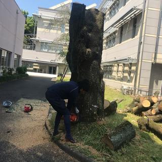 木の撤去☆伐採抜根工事なら 庭の手入れ店へ 所沢市 − 埼玉県