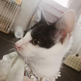 人が大好きイケメン子猫の画像
