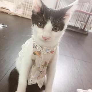 人が大好きイケメン子猫 - 猫