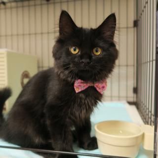 長毛の穏やかな黒猫くん