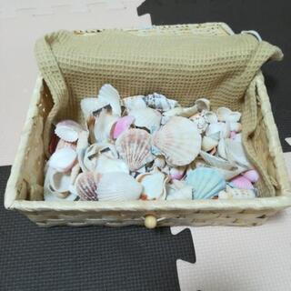 貝殻🐚セット(ケースもどうぞ)