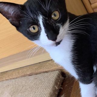 生後5ヶ月の仔猫2匹🐈ワクチン接種済(2回)