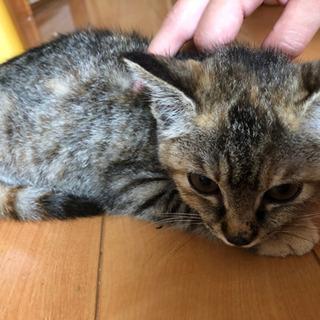 迷い猫 推定3ヶ月のメスの子猫ちゃん