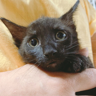No.33 うっすら虎柄の黒猫
