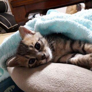 可愛い甘えん坊なキジトラ君!