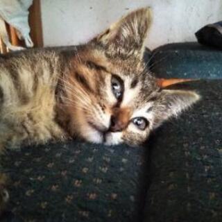 サバトラ野良猫の子猫 生後1ヶ月の女の子