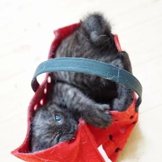 片目でもかわいいオテンバちゃん(3ヶ月齢)