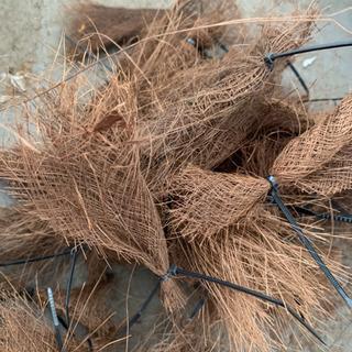 天然棕櫚産卵床40個