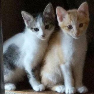 子猫(メス4ヶ月)の里親さまを探しています