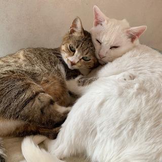 仲良しな2匹 - 猫