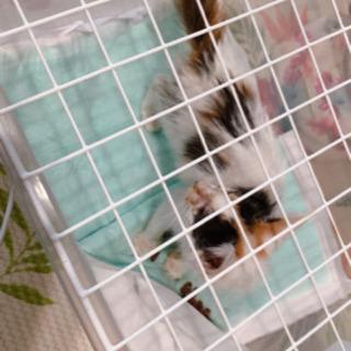 子猫 2~3ヶ月くらいです
