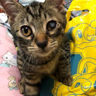 幸せを運ぶ鍵シッポの4ヶ月のメス子猫の画像