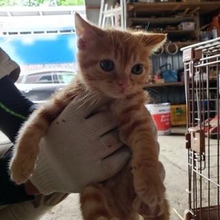拾い子猫三ヶ月くらい