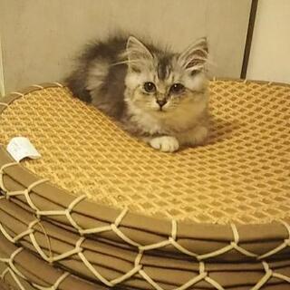 野良猫から産まれた2ヶ月くらいの女のコ