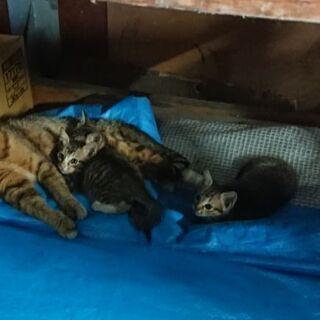 引き取った猫の子猫三匹
